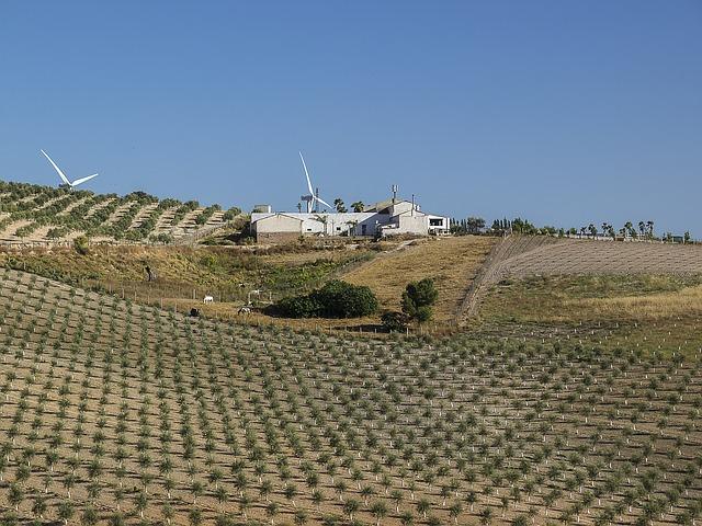 Principales plantaciones del árbol del pistacho en la provincia de Sevilla