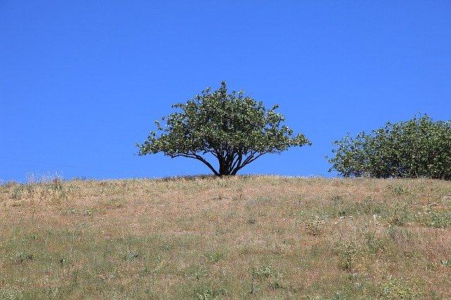 Introducción de plantaciones de Pistacho en la provincia de Málaga