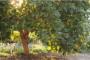 Cómo cultivar los árboles de aguacates