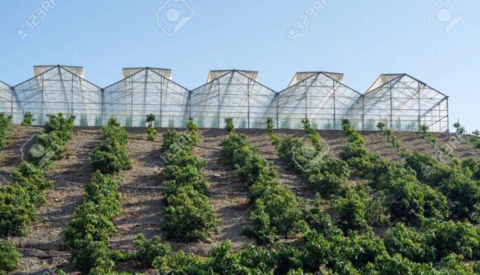 Andalucía potencia mundial en la producción de aguacates